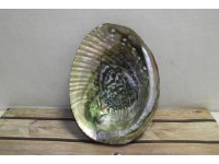 Abalone Shell Large
